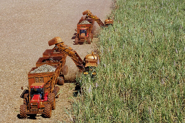CCEE: Biomassa fecha 2015 com capacidade instalada de 6% acima do ano anterior